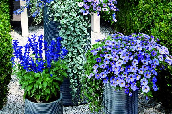 Beet Und Balkonpflanzen Blumen Saaletal